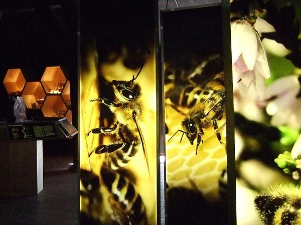 """Bienenwelten""</br>Niederhaverbeck"
